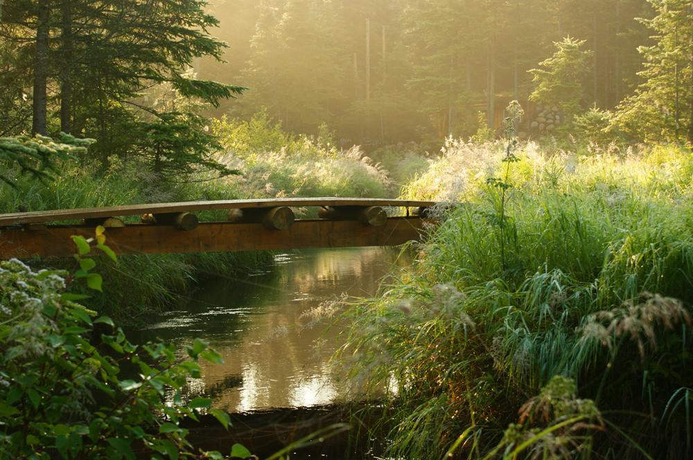 Pont Chaumière Fleur Soleil